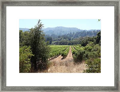 Sonoma Vineyards In The Sonoma California Wine Country 5d24516 Framed Print by Wingsdomain Art and Photography