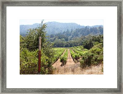Sonoma Vineyards In The Sonoma California Wine Country 5d24521 Framed Print by Wingsdomain Art and Photography