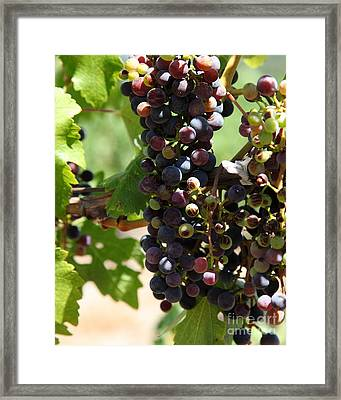 Sonoma Vineyards In The Sonoma California Wine Country 5d24572 Vertical Framed Print by Wingsdomain Art and Photography