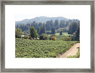 Sonoma Vineyards In The Sonoma California Wine Country 5d24585 Framed Print by Wingsdomain Art and Photography