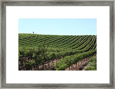 Sonoma Vineyards In The Sonoma California Wine Country 5d24588 Framed Print by Wingsdomain Art and Photography