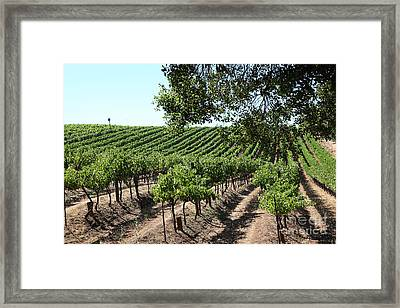 Sonoma Vineyards In The Sonoma California Wine Country 5d24594 Framed Print by Wingsdomain Art and Photography