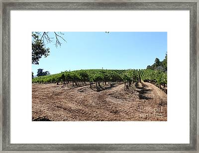 Sonoma Vineyards In The Sonoma California Wine Country 5d24597 Framed Print by Wingsdomain Art and Photography