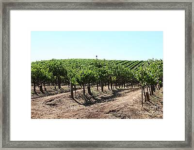 Sonoma Vineyards In The Sonoma California Wine Country 5d24598 Framed Print by Wingsdomain Art and Photography