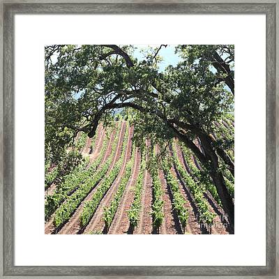 Sonoma Vineyards In The Sonoma California Wine Country 5d24619 Square Framed Print by Wingsdomain Art and Photography