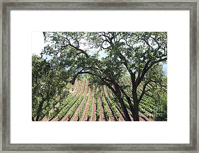 Sonoma Vineyards In The Sonoma California Wine Country 5d24619 Framed Print by Wingsdomain Art and Photography