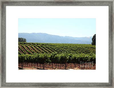 Sonoma Vineyards In The Sonoma California Wine Country 5d24623 Framed Print by Wingsdomain Art and Photography