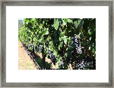 Sonoma Vineyards In The Sonoma California Wine Country 5d24627 Framed Print by Wingsdomain Art and Photography
