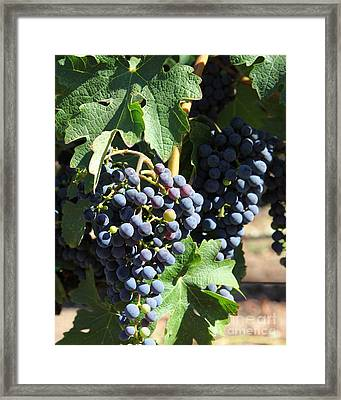 Sonoma Vineyards In The Sonoma California Wine Country 5d24630 Vertical Framed Print by Wingsdomain Art and Photography