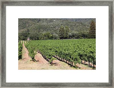 Sonoma Vineyards In The Sonoma California Wine Country 5d24632 Framed Print by Wingsdomain Art and Photography