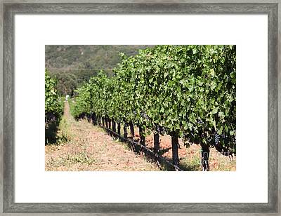 Sonoma Vineyards In The Sonoma California Wine Country 5d24633 Framed Print by Wingsdomain Art and Photography