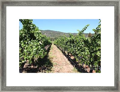 Sonoma Vineyards In The Sonoma California Wine Country 5d24638 Framed Print by Wingsdomain Art and Photography