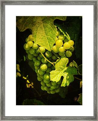 Sonoma Wine Grapes 002 Framed Print by Lance Vaughn