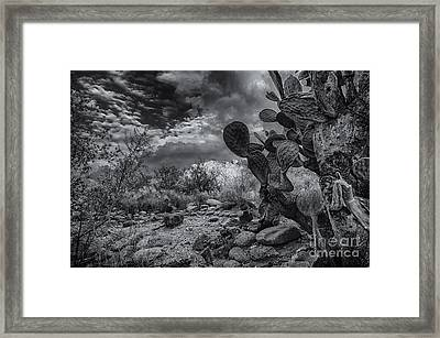 Framed Print featuring the photograph Sonoran Desert 15 by Mark Myhaver