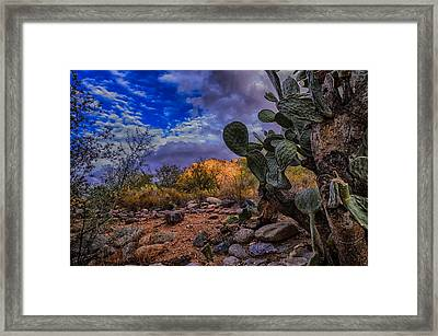 Sonoran Desert 54 Framed Print by Mark Myhaver