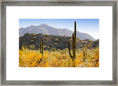 Sonoran Desert Beauty Framed Print