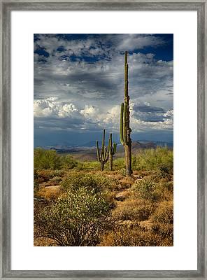 Sonoran Desert Rains Framed Print by Saija  Lehtonen