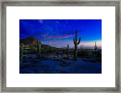 Sonoran Desert Saguaro Cactus Framed Print by Scott McGuire