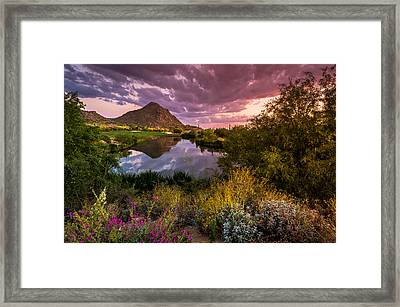 Sonoran Desert Spring Bloom Sunset  Framed Print