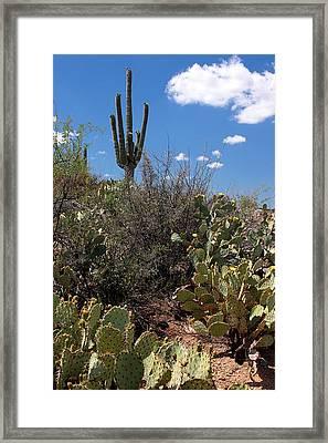 Sonoran Desert Spring Framed Print by Joe Kozlowski