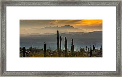 Sonoran Desert Sunset Framed Print
