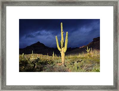 Sonoran Desert Symphony Of Light 2 Framed Print by Bob Christopher