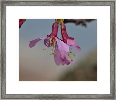 Soon Spring Framed Print by Larry Bishop