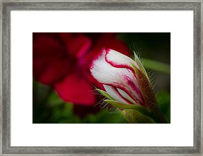 Sooon.... Framed Print by Andreas Levi