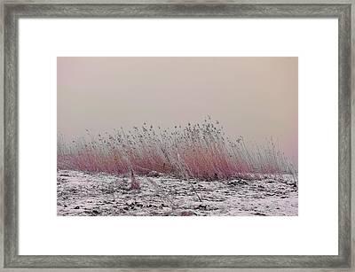 Soothing View Framed Print by Randi Grace Nilsberg