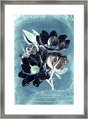 Sophisticated - Floral Ccc Framed Print