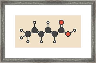 Sorbic Acid Food Preservative Molecule Framed Print
