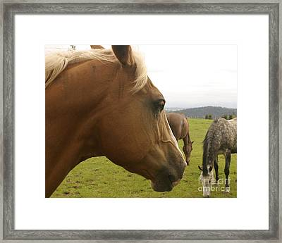 Framed Print featuring the photograph Sorrel Horse Profile by Belinda Greb