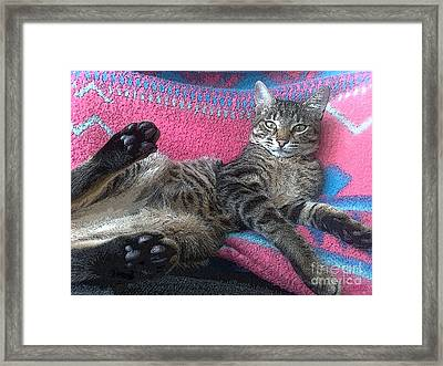 Framed Print featuring the photograph Sorry A Bit Tired by Hanza Turgul