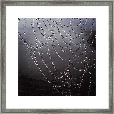 Dew On A Spider Web Framed Print