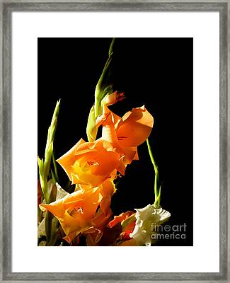 Framed Print featuring the photograph Sorry by Paul Foutz
