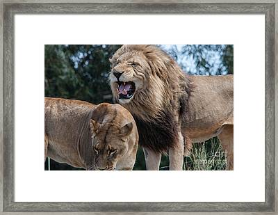 Sorry Your Majesty Framed Print