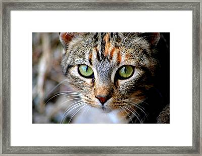 Soul Cat Framed Print by Deena Stoddard