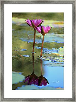 Soul Mates Framed Print by Suzanne Gaff