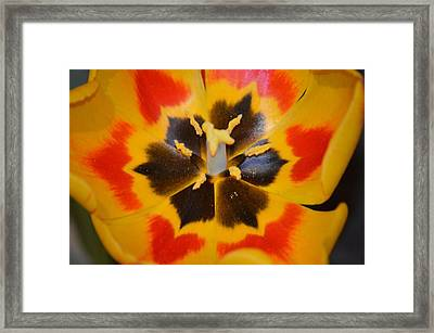 Soul Of A Tulip Framed Print