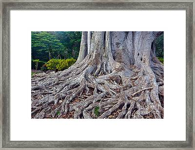 Framed Print featuring the photograph Soul Roots by Gina Savage