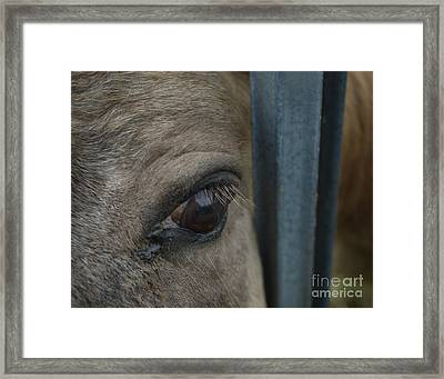 Framed Print featuring the photograph Soul Searching Eyes by Peter Piatt