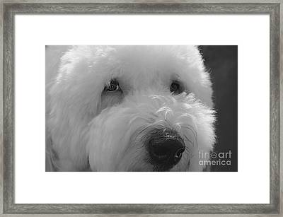 Soulful Eye's Old English Sheep Dog Framed Print