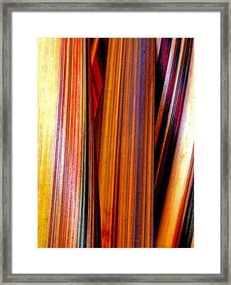 Soulful  Framed Print