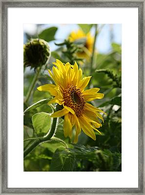 Framed Print featuring the photograph Soulshine No.2 by Neal Eslinger