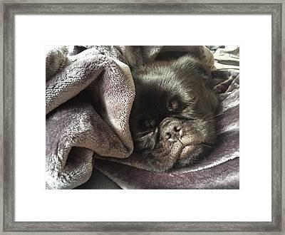 Soundly Sleeping Framed Print