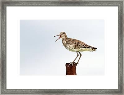 Sounds Of Nature Framed Print by Trevor Awalt