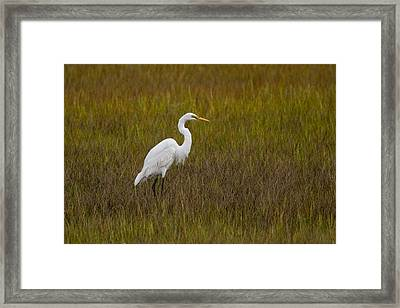 Soundside Park Topsail Island Egret Framed Print by Betsy Knapp