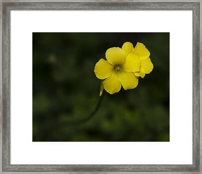 Sour Grass Framed Print