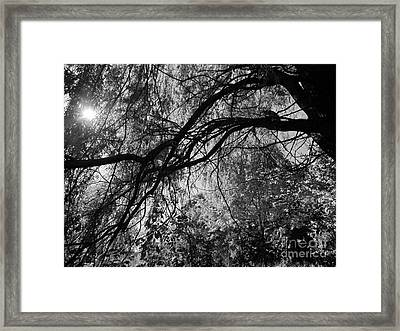 Source Of Energy 3 Framed Print by France Laliberte