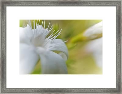 Source Of Light Framed Print